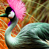 Pink headed bird in garden puzzle