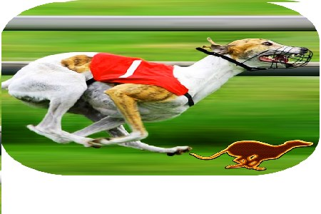 Dog Racing Betting